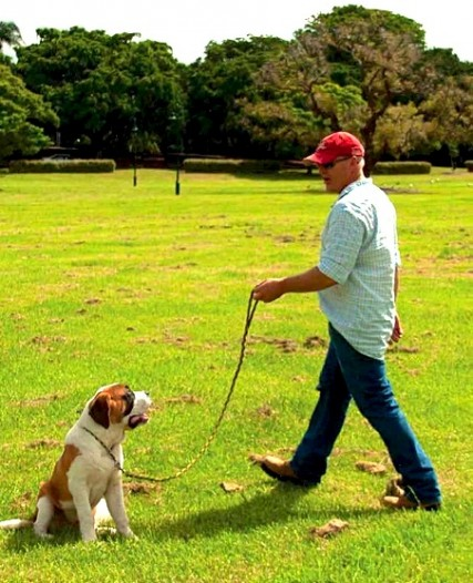 Scott training a St Bernard in the park